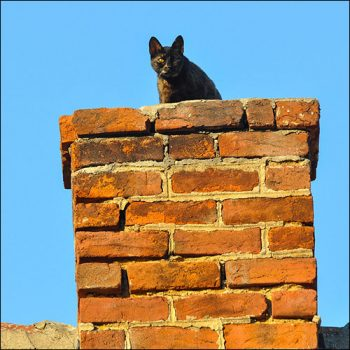 advanced-chimney-animal